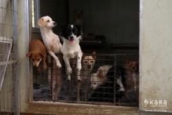 보호소의 동물들을 도와주세요!